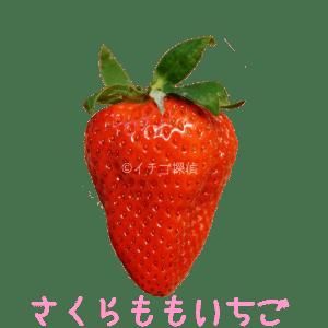 イチゴ探偵|さくらももいちご品種図鑑