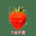 イチゴ探偵|さぬきひめ品種図鑑・断面図