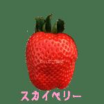 イチゴ探偵|スカイベリー品種図鑑・断面図