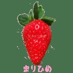 イチゴ探偵|まりひめ品種図鑑・断面図