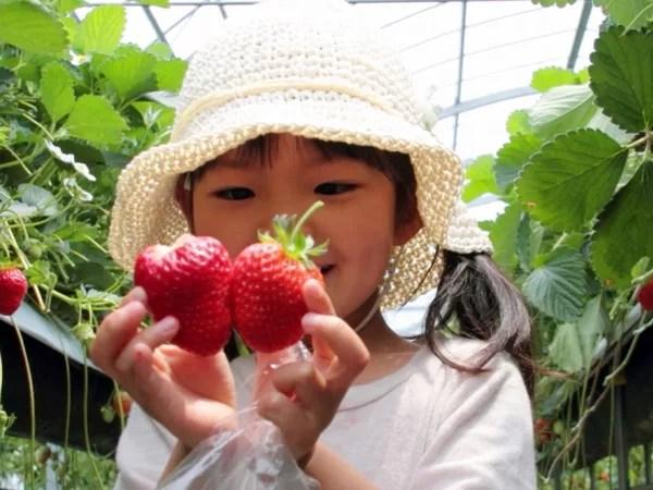 ホテル併設型いちご農園「Royal Strawberry Park(ロイヤルストロベリーパーク)」12月15日オープン!
