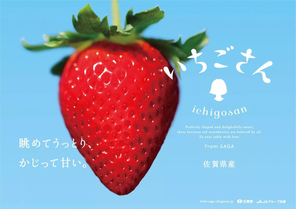 佐賀県産の新品種いちごがデビュー!「いちごさん」というブランド名に決定!