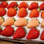 【いちごの通販まとめ】人気のあまおう・さくらももいちご・白いちご・楽天ランキング上位の甘い苺情報も!