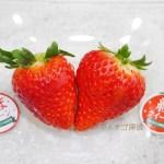 【篠田いちご園】あまクイーン・紅クイーンを食べ比べ!兵庫県生まれの新品種いちご姉妹を堪能!