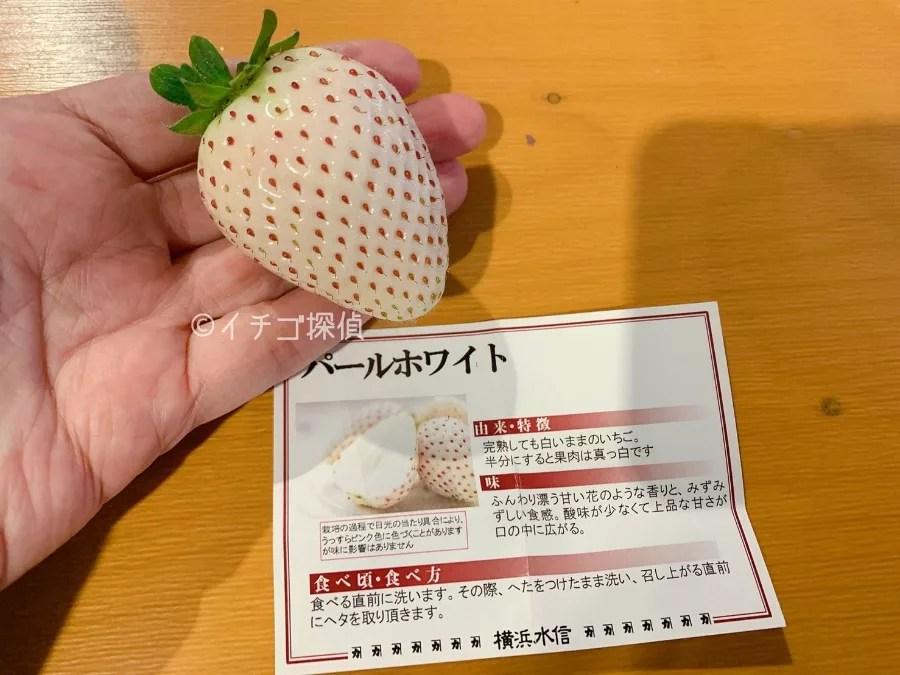 3種の白いちご【シャンパンゴールド】【真珠姫】【パールホワイト】を食べ比べ!横浜ストロベリーフェスティバル