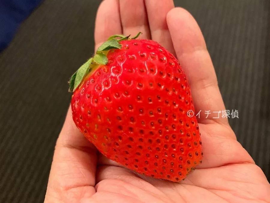 【ひめ寒紅いちご】寒じめという手法で甘さを凝縮した高糖度の希少いちごを「横浜水信」で購入!