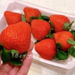 【恋のぞみ】熊本県産イチゴを実食!品種名は【恋みのり】大粒で輸送性に優れた新品種いちご!