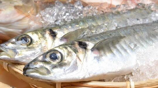 魚 冷蔵庫 保存期間