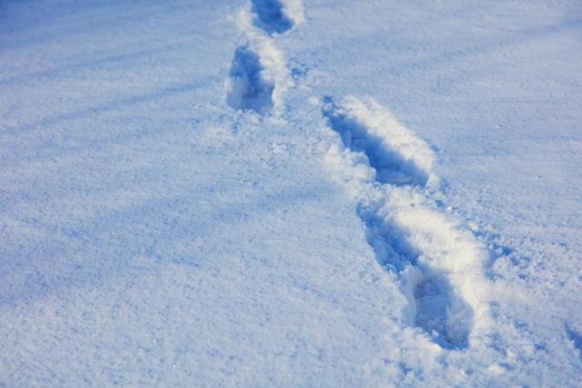 雪道 下り坂 歩き方