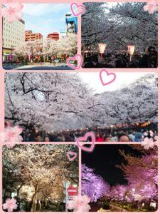 婚活、桜、花見、恋愛、婚活女子、春