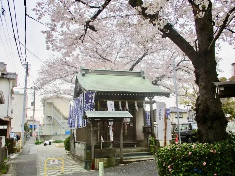 浮嶋弁財天と桜