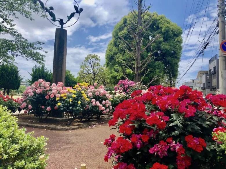 行徳駅前公園のバラ園