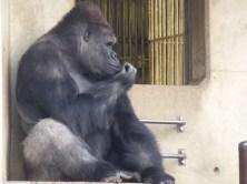 Nagoya Zoo