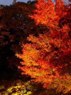Autumn leaves at night