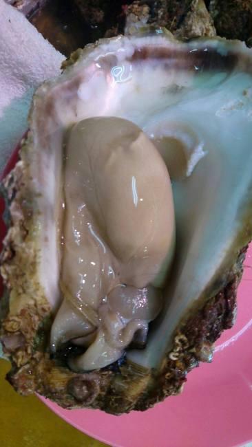 親不知産 天然岩牡蠣