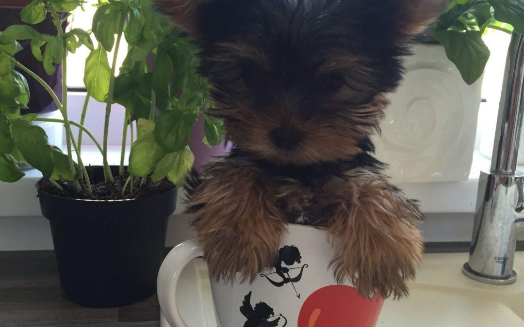 Hunde Foto: Meine süße Little