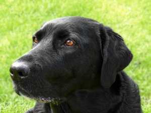 dog-1359302_1280