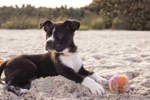 dog-690143_1280