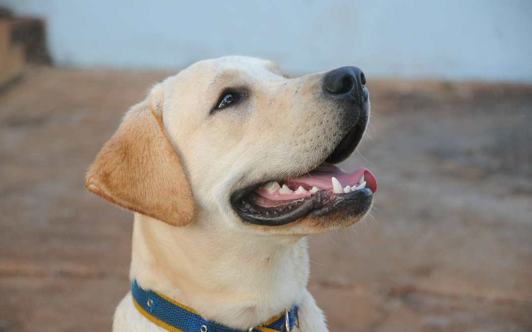 Lohnt sich eine Versicherung für Hundehalter?