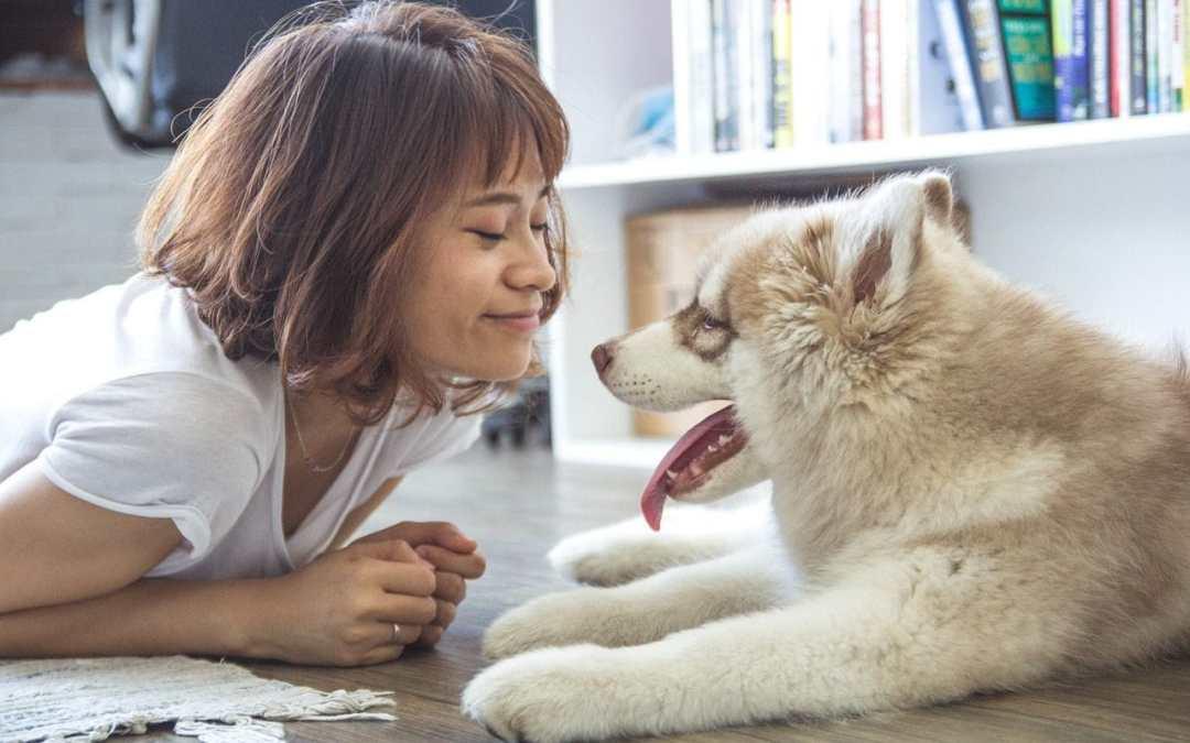 So richten Sie Ihr Haus hundefreundlich ein