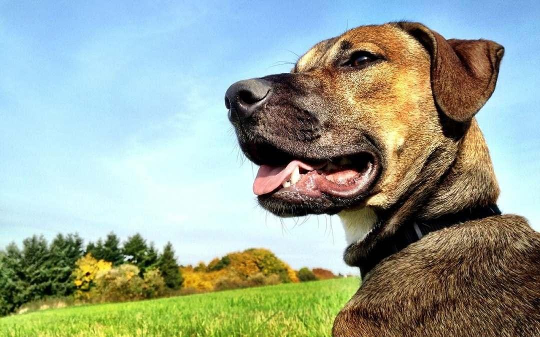 Hund im Büro: Hier ist Vorsicht geboten