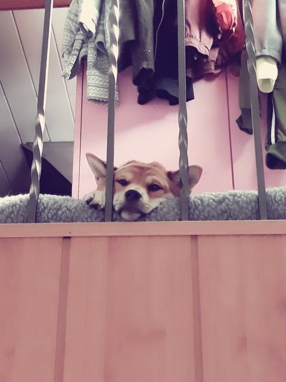 Hunde Foto: Jessica und Pablo - Mein kleiner meister Yoda 😂😂❤❤