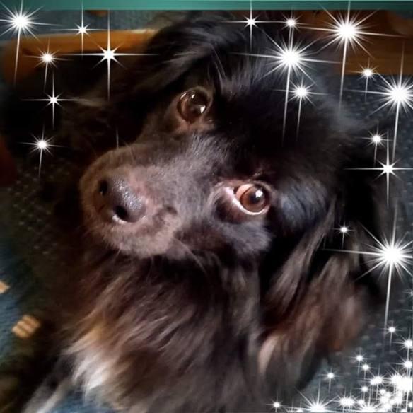 Hunde Foto: Doris und Picop - Knutschkugel ❤️❤️