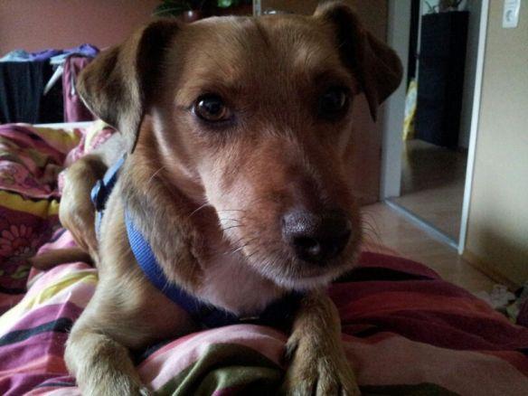 Hunde Foto: Manuela und Albo - Zeit zum Aufstehen