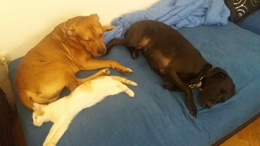 Hunde Foto: Müllner und Charmed und Bosco - Patchwork Family