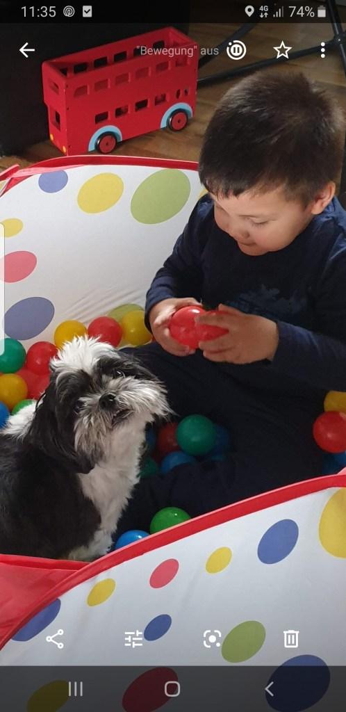 Hunde Foto: Szabo und Tedy - Tedy und Diego