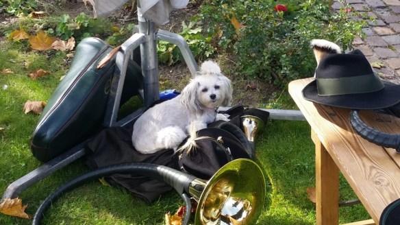 Hunde Foto: Uschi und Sydney - Ich wäre gerne ein Jagdhund