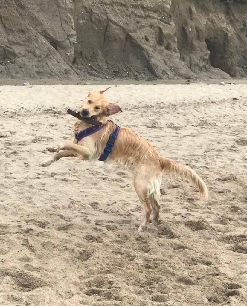 Hunde Foto: Karin und Lilly - Lilly the joly jumper, 14 Mon. alt am Ostseestrand