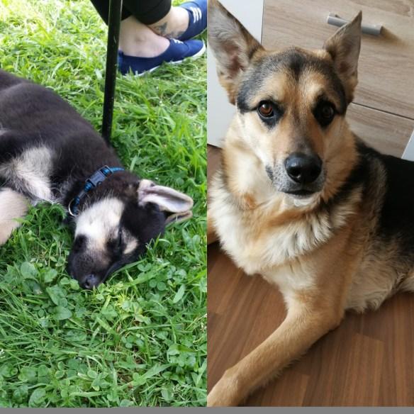 Hunde Foto: Julia und Balu - Wie schnell die Zeit vergeht😊