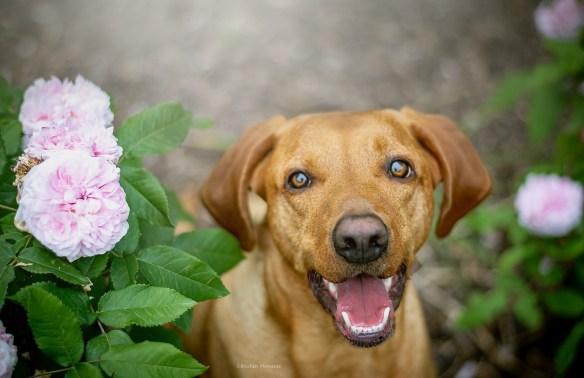 Hunde Foto: S.binchen und Balu - S.binchen Momente