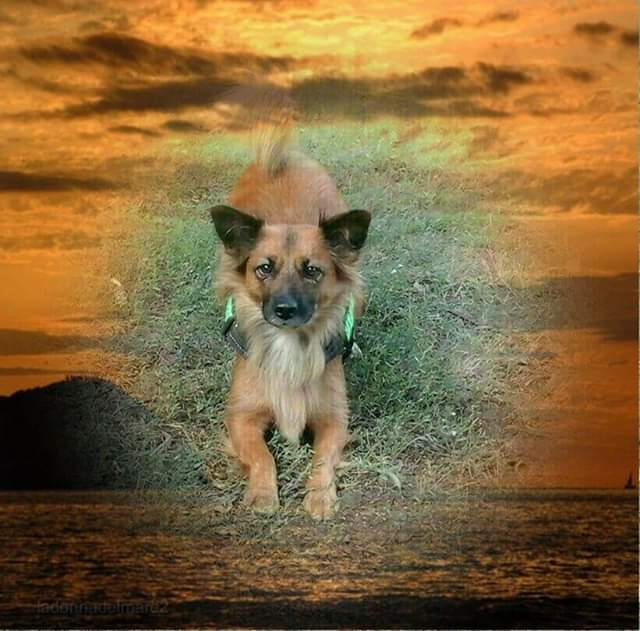 Hunde Foto: Ralf und Luna - Sonnenschein