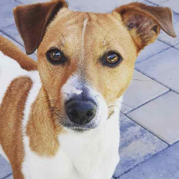 Hunde Foto: Catherine und Zlatan - Ich hab Hunger