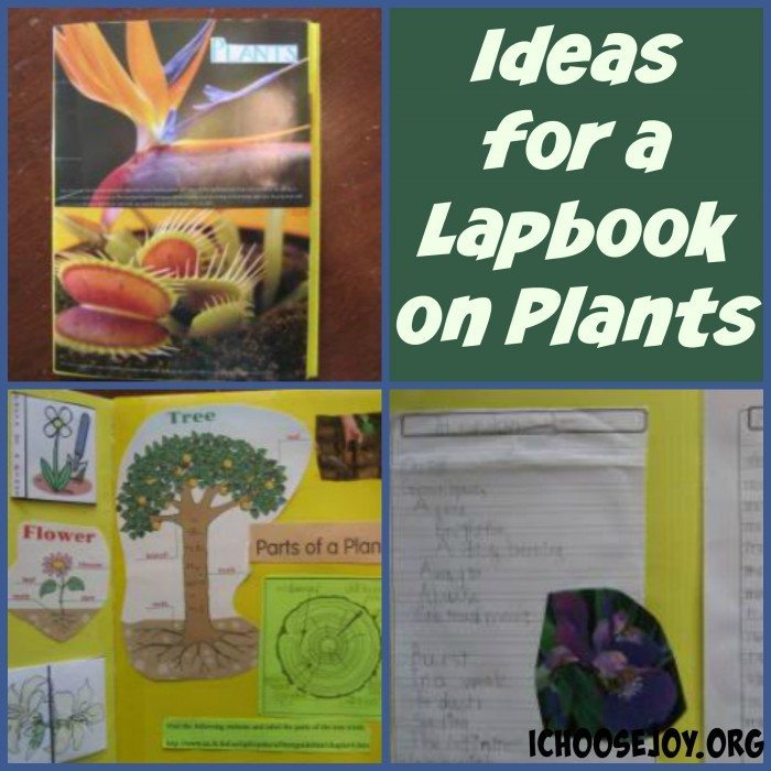 Ideas for Lapbook on Plants