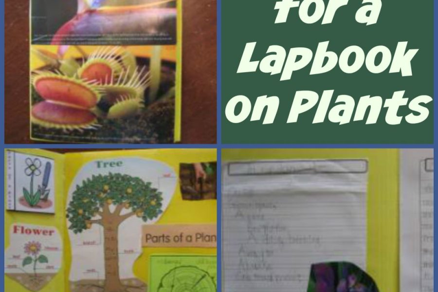 Ideas for Plants Lapbook with pictures and resources