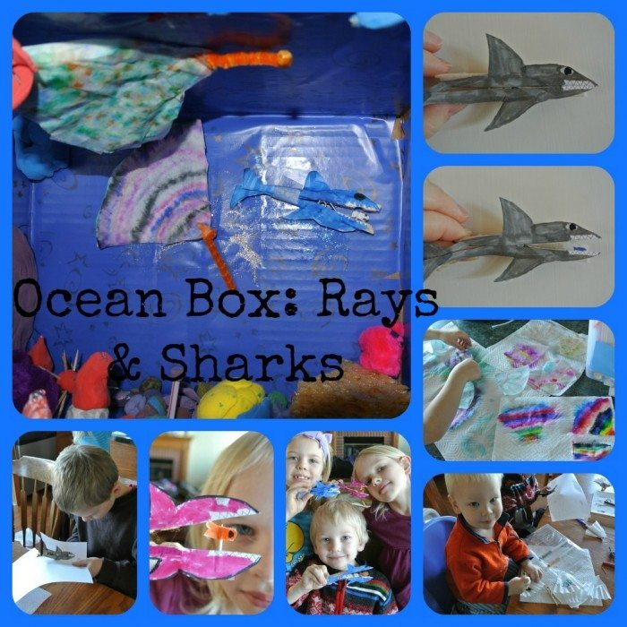 Ocean Box Ray and Shark Collage 2