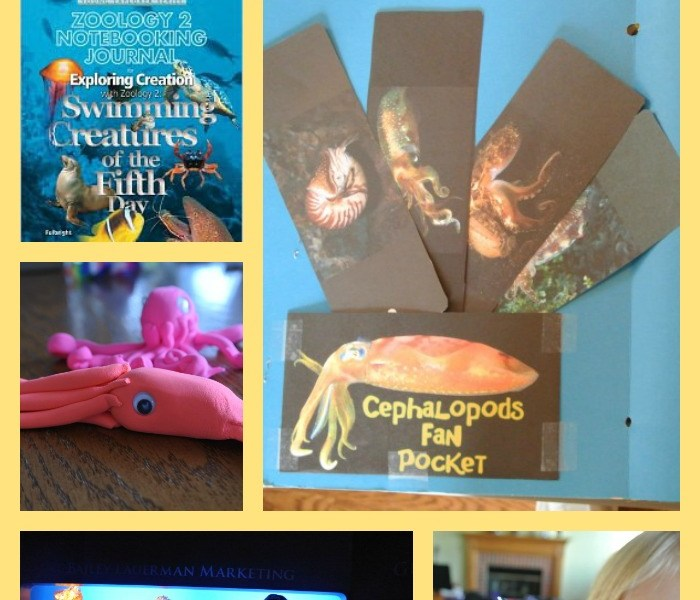 Apologia Swimming Creatures: Lapbook, Crafts, Field Trips, and more! See all we did this year to learn about ocean animals.