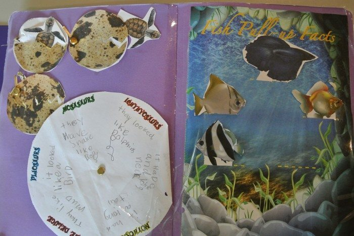Apologia Zoology 2 Lapbook 007