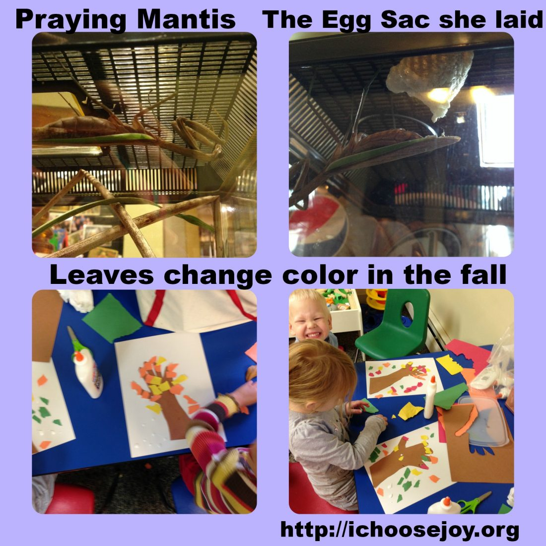 From House to Home {Link Party}: Science Fun!