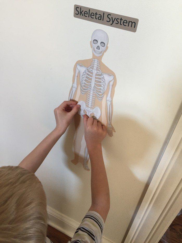 Mona Melisa Designs Human Body 026
