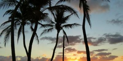 USA Florida Floriday Keys Islamorada Sonnenaufgang Strand Palmen