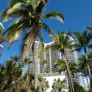 Sonnenschein und Palmen Feeling