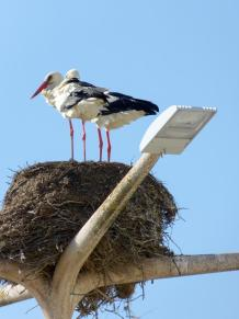 Portugal Algarve Faro Storch