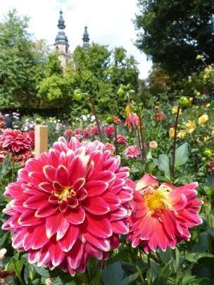 Fulda Dahliengarten Blume Dom