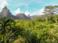 Thailand Khao Sok Nationalpark Dschungel