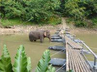 Thailand River Kwai Jungle Rafts Dschungel schwimmende Flöße Elefant
