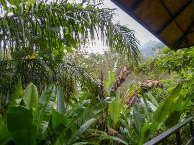 Thailand Khao Sok Nationalpark Dschungel Anurak Community Lodge Balkon Pflanzen